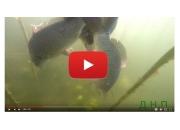 Зарыбление водоема с GoPro