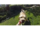 Fetch (Dog Harness) | Крепление на собаку для экшн-камер GoPro