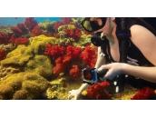 Red Dive Filter (for Standard + Blackout Housing)   Светофильтр красного цвета для экшн-камер GoPro Hero4